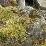 Moss Rock Landscaping Boulders